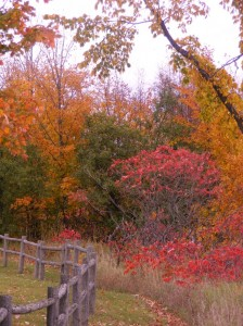 Fall Colors in Mackinaw City